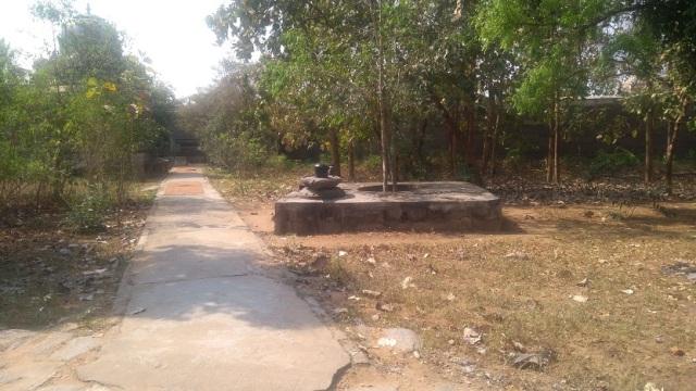 Baktajaneswarar temple -Naval tree -Sthalavruksha
