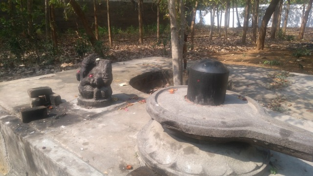 Baktajaneswarar temple -Sthalavruksha-Naval